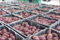 15000平果蔬批发市场冷库设计建造成本是多少
