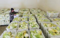山东大型蔬菜冷库安装造价需多少钱