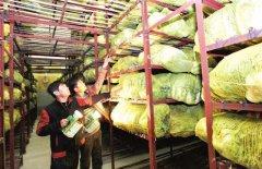 新建1000吨蔬菜冷库设计大概多少钱?