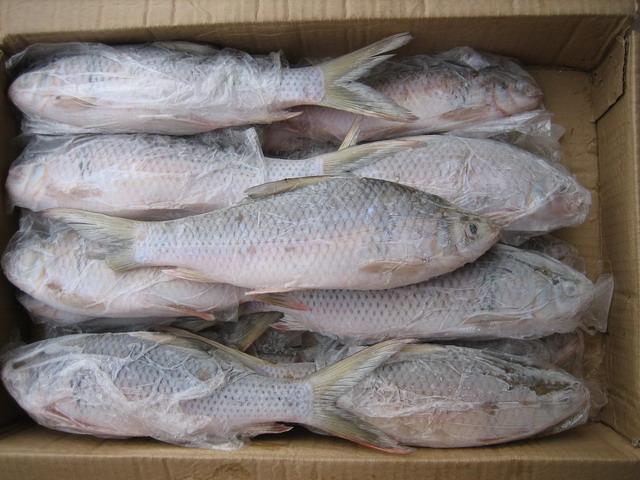 鱼类冷藏库
