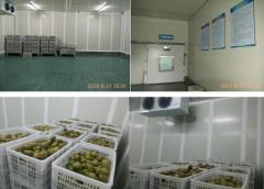 重庆猕猴桃气调保鲜库工程案例